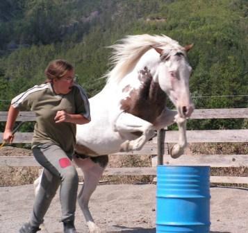 equitation ethologique, equitopassion 04, stages et vacances ,paca